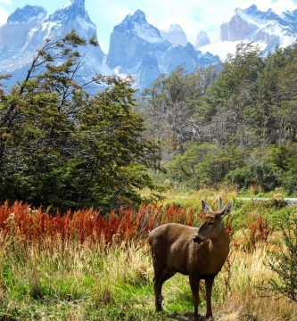 Panchita, la Huemul de Torres del Paine