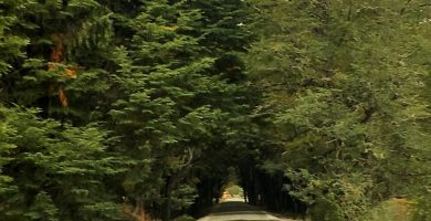 Túnel de árboles en la Carretera Austral